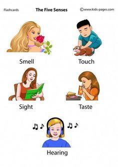 The Five Senses flashcards Learning English For Kids, English Lessons For Kids, Kids English, English Language Learning, English Study, Teaching English, English Verbs, English Vocabulary Words, Learn English Words