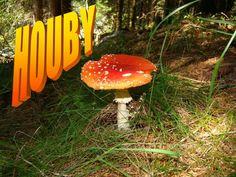 """Hledat """"houby"""" na SlidePlayer"""