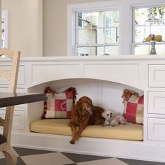 Dog Room Design, Pictures, Remodel, Decor and Ideas - page 4