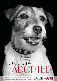 Uggie Left Paw Prints on the Walk of Fame—and on Our Hearts   PETA's Blog   PETA