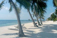 The Best Vacation in Northern Belize   Ambergris Caye