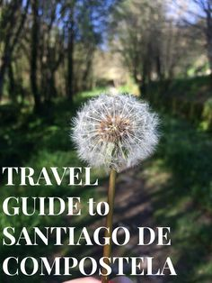 Travelling to Santiago de Compostela. Here is an ex-pat's guide to the best things to do and see! Richard Feynman, Free Blog, What Is Life About, The Places Youll Go, Travelling, Things To Do, Santiago De Compostela, Camino De Santiago, Things To Make