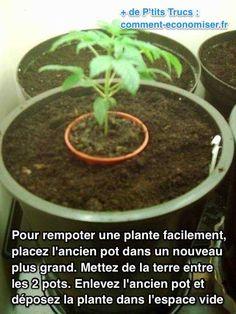 """Heureusement, il existe un truc pour bien rempoter une plante facilement. L'astuce est de placer l'ancien pot dans un nouveau plus grand pour créer un """"moule"""".  Découvrez l'astuce ici : http://www.comment-economiser.fr/rempoter-une-plante-facile.html"""