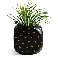 Mini Dot Planter & Succulent ($30) ❤ liked on Polyvore featuring home, home decor, succulent planters, sea home decor, cactus planter, black home decor and black planters