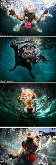 O fotógrafo Seth Casteel criou esse ensaio sensacional de cachorros mergulhando, com as fotos tiradas de dentro d'água.