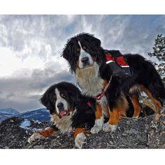 Loving these beautiful adventure dogs! Photo credit: Instagrams' @mazamadog