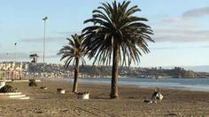 playa blanca. lota