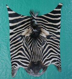 "Real Zebra Face Leather Size: 27x22"" Genuine Zebra Skin Face Pillow Cushion #CowhidesUSA"