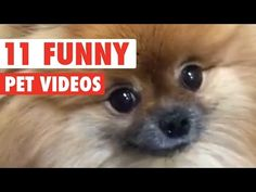 11 Funny Pet Video Compilation 2016 - https://funnypetvideos.net/11-funny-pet-video-compilation-2016/