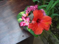 Visit http://foap.com/me/thepaperdollies to buy good resolution photos for your blog, article, commercials, marketing purposes.  This Photo: Beautiful Luscious Hibiscus Flower with Wooden Deck Background. $10    (Note: 50% of the price goes to FOAP.com for their hosting)