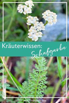 Hydrangea Care, Hydrangea Flower, Achillea Millefolium, Liquid Fertilizer, Different Plants, Medicinal Herbs, Back Gardens, Kraut, Garden Plants