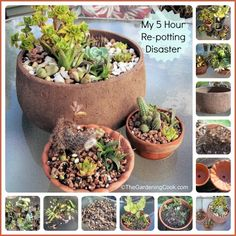 Creative Succulent Planters - The Gardening Cook
