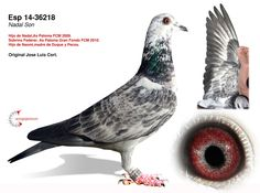 Pigeon Loft Design, Pigeon Books, Pigeon Pictures, Homing Pigeons, Dove Pigeon, Cc Images, Best Stocks, Animals And Pets, Egypt