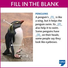 How much do you know about penguins? To see the answers, click here:  https://www.pinterest.com/pin/450500768955552399/
