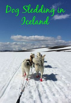 Dog sledding in Iceland. We did this in the summer and it was  the most amazing day ever!!