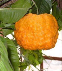 healthy fruits in pregnancy fruits in puerto rico