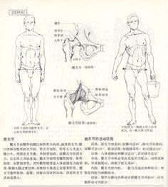 人体造型基础——人体局部解剖 - 水木白艺术坊 - 贵阳画室 高考美术培训