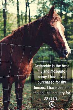 $24.95 Naturally Sourced insect spray. Perfect on horses and their riders to kill and repel fleas, ticks and mosquitoes. #horses #pets #equestrian #natural #cedarcide Cedarwood oil and Lemongrass are the active ingredients in Tickshield by Cedarcide. https://www.cedarcide.com/product/ts-lemonrgass/