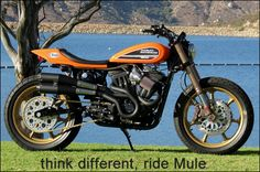 Harley Davidson News – Harley Davidson Bike Pics Sportster Cafe Racer, Harley Scrambler, Hd Sportster, Triumph Scrambler, Scrambler Motorcycle, Flat Track Motorcycle, Motorcycle Garage, Custom Harleys, Custom Bikes