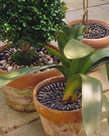 Pebble Pots - Martha Stewart Crafts