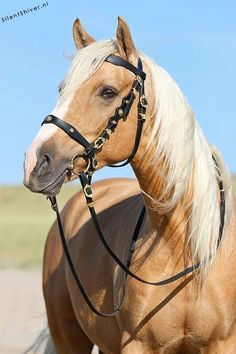 Someday I'll have my dream Palomino All The Pretty Horses, Beautiful Horses, Animals Beautiful, Cute Animals, Cute Horses, Horse Love, Horse Photos, Horse Pictures, Palamino Horse