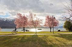 What are your plans for Spring. Come and visit Wanaka, stay at Edgewater.  Maybe take in Paul Ubana Jones and Bryce Wastney's show at Edgeawater on 22 September?  Wanaka  Spring will be here sooooon! Before we know it...