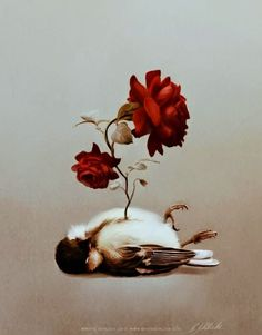 abra el azul del cielo: El ruiseñor y la rosa