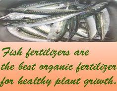 Fish Fertilizer As An Organic Fertilizer on Behance