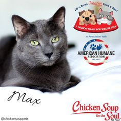 Chicken Soup for the Soul will provide up to 1 million meals by donating one pound of pet food to shelter pets for every Chicken Soup for the Soul pet food item purchased by participating retailers from June 15, 2016 – December 31, 2016.