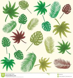 tropical-leaves-vector-seamless-pattern-background-palm-banana-aralia-philodendron-69827818.jpg (1300×1390)