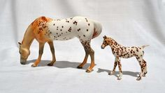 Photo by Meg Walker Appaloosa, Giraffe, Originals, China, Horses, Animals, Image, Animales, Animaux