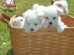 Puppies....
