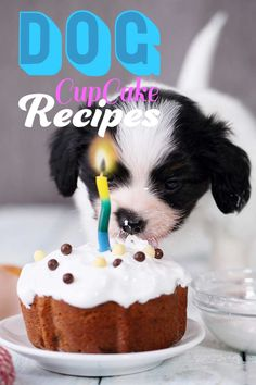 Dog cupcake recipes - Fun home cooking for dogs