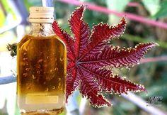 Касторовое масло для волос. 1. Налейте в ладони немного масла, разотрите и смажьте касторовым маслом ...