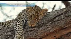 Discover amazing things and connect with passionate people. Passionate People, Safari, Animals, Tanzania, Animales, Animaux, Animal, Animais, Dieren