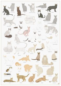 Chart: A Beautiful Illustrated Poster Of Cat Breeds Around The World - DesignTAXI.com