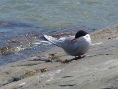 Matkojeni blogi: Vuosaari. Suburb. Ocean.
