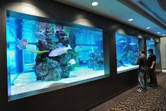 aquarium goes from one end of the wall to the other fresh water tank in Silo Wall Aquarium Auxiliary Tank higher than Fish Tank, Grow Beds & Collection Tank & back Aquarium Sharks, Wall Aquarium, Aquarium Terrarium, Home Aquarium, Aquarium Design, Marine Aquarium, Aquarium Fish Tank, Saltwater Tank, Saltwater Aquarium