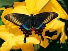 Fondos de escritorio de mariposas
