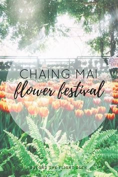 I was lucky enough to visit Chiang Mai during its Flower Festival, a celebration held every year during the first week of February. Flower Festival, Chiang Mai, Travel Inspiration, Travel Destinations, Thailand, Neon Signs, World, Flowers