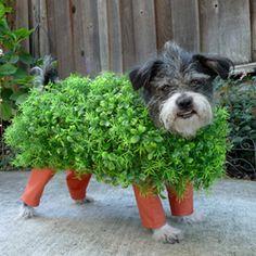 Dog Halloween costumes. Chia pet!