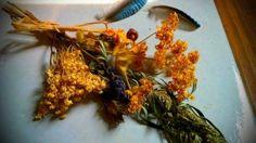 Mittsommer-Kräuterbuschen 15.8.: Kräuterweihe – Heute werden Kräuterbuschen gesammelt