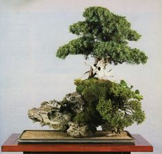 Masters' Bonsai Gallery: Let's Rock! | Bonsai Bark