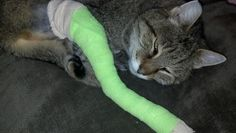 """This is how my life with Cats sadly began. Meet Ms. Kib """"Kibby"""". She came with my house, a community cat, spayed. I gave her a place to get out of the elements, fed her, etc. She was happy with that life then along came a dog that mauled her leg. She was on death's door. Middletown Animal Hospital fixed her up. She's an indoor kitty now and loves it."""