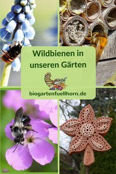 Wildbienen in unseren Gärten. Was können wir in unserem Garten tun, dasmit Wildbienen einen Lebensraum finden? #garten #wildbienen #blumen