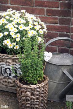 Garden (patio) details / Puutarhan (pation) yksityiskohtia