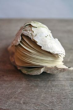 Handstitched Oyster Book Sculpture by Erica Ekrem Untraditional format. Possibilities of making a book from a shape in the content. Paper Book, Paper Art, Cut Paper, Altered Books, Altered Art, Book Art, Artist's Book, Book Journal, Journals