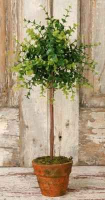 these are such great little topiaries for the price Topiary Garden, Topiary Trees, Garden Pots, Potted Garden, Topiary Plants, Outdoor Plants, Potted Plants, Garden Trellis, Plant Trellis