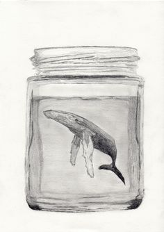 A Humpback whale in a Glass Jar, drawing