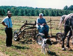 new york amish farmer ny